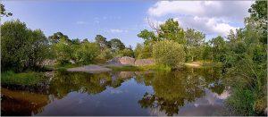 forêt de Fontainebleau notreterre.org